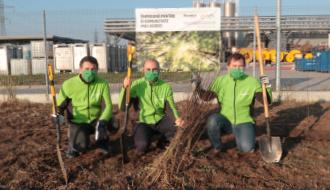 Plantare copaci - o acțiune pentru reducerea amprentei de carbon